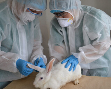 Начинаются клинические испытания разработанной в Казахстане вакцины