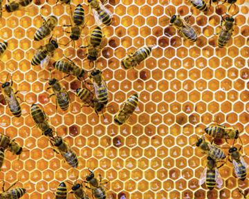 Чи може мед полегшити симптоми кашлю та застуди?