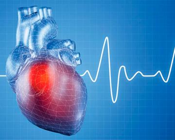 Дефицит железа в организме приводит к развитию заболеваний сердечно-сосудистой системы?