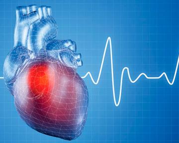 Дефіцит заліза в організмі призводить до розвитку захворювань серцево-судинної системи?